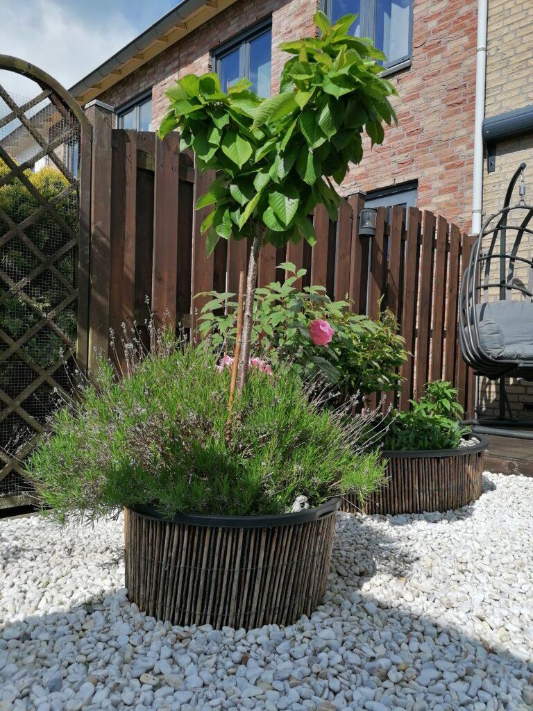 verhoogde bloembak, gemaakt van een cementbak en bekleed met wilgentakken.
