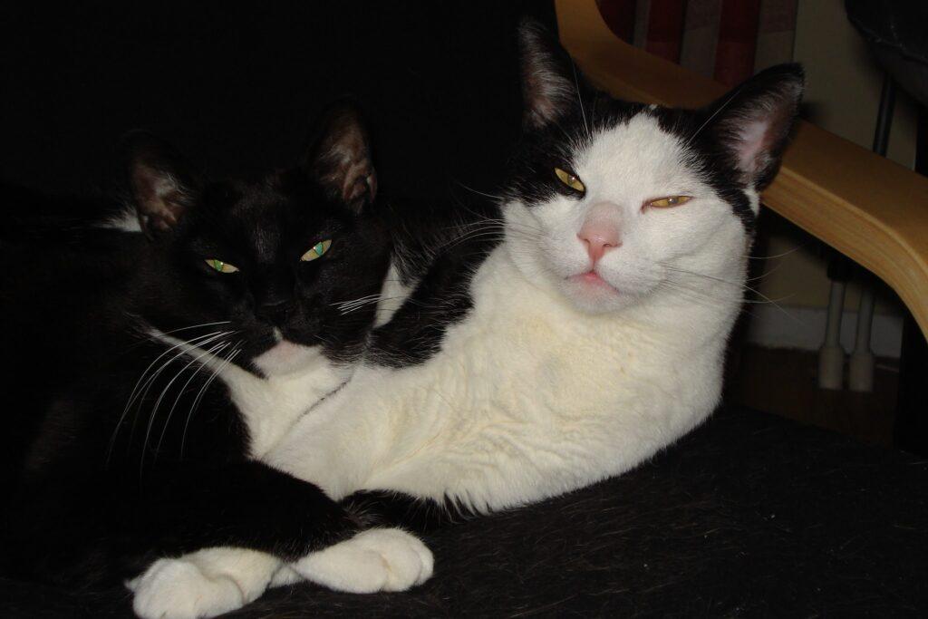 2 katten van mijn veestapel liggen bij elkaar