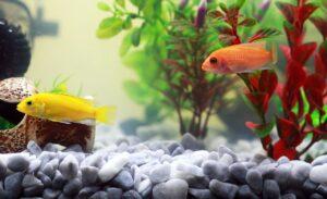 fish, aquarium, yellow fish